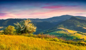 Colorful summer sunrise in the Carpathian mountains with blossom tree. Borzhava ridge, Transcarpathian, Ukraine, Europe.