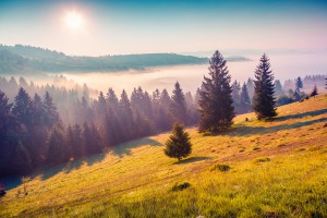 Sunny summer morning in the foggy Carpathian mountains. Borzhava ridge, Transcarpathian, Ukraine, Europe. Instagram toning.