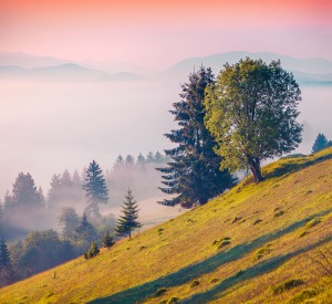 Colorful summer morning in the foggy Carpathian mountains. Borzhava ridge, Transcarpathian, Ukraine, Europe. Instagram toning.