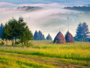 Haymaking in a Carpathian village. Ukraine, Europe. Retro style.