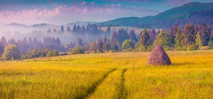 Haymaking in a Carpathian village. Colorful summer sunrise in the foggy mountain. Instagram toning.